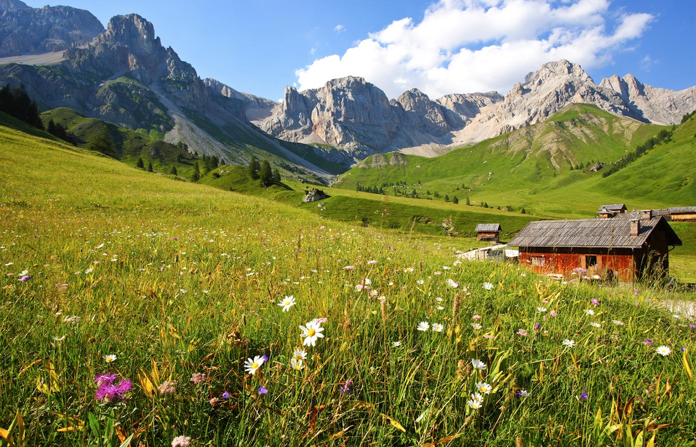 Typical traditional wooden house on meadow with flowers of the Val di Fassa
